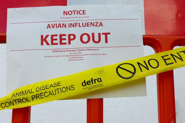 Bird flu biohazard poster. The sign says Notice, Avian Influenza Keep out. There is yellow tape saying Animal Disease Control Precautions, the Defra Logo and No entry.