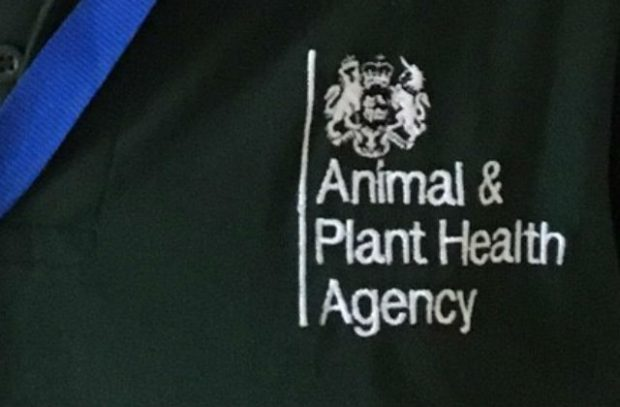 Close up photo of APHA logo on a polo-shirt