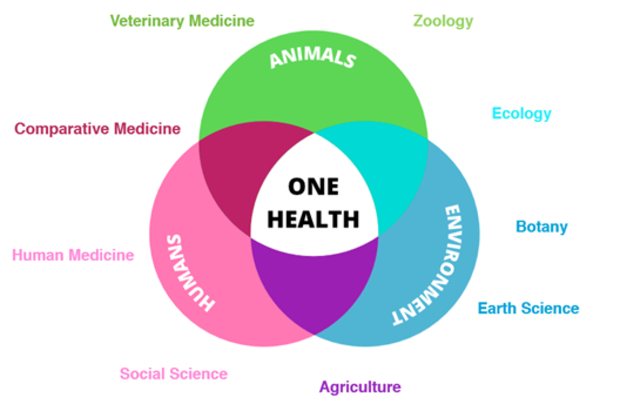 A venn diagram of the three factors of one health, environment, humans and animals