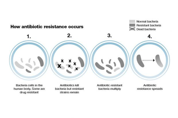 A diagram showing the four stages of AMR development