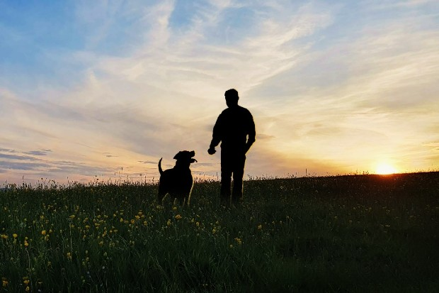 A photo of a person and a dog in a field